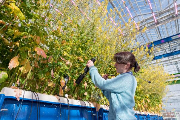 探访英国环境科学顶尖学府――克兰菲尔德大学